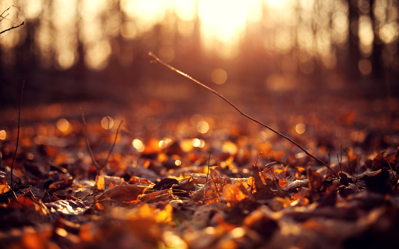 Výsledek obrázku pro autumn pictures